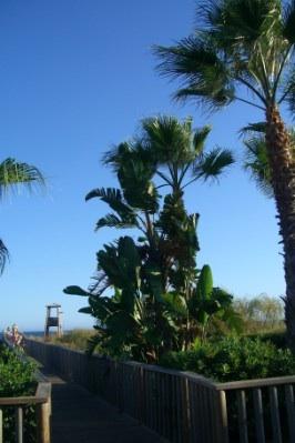 Promenade and beach