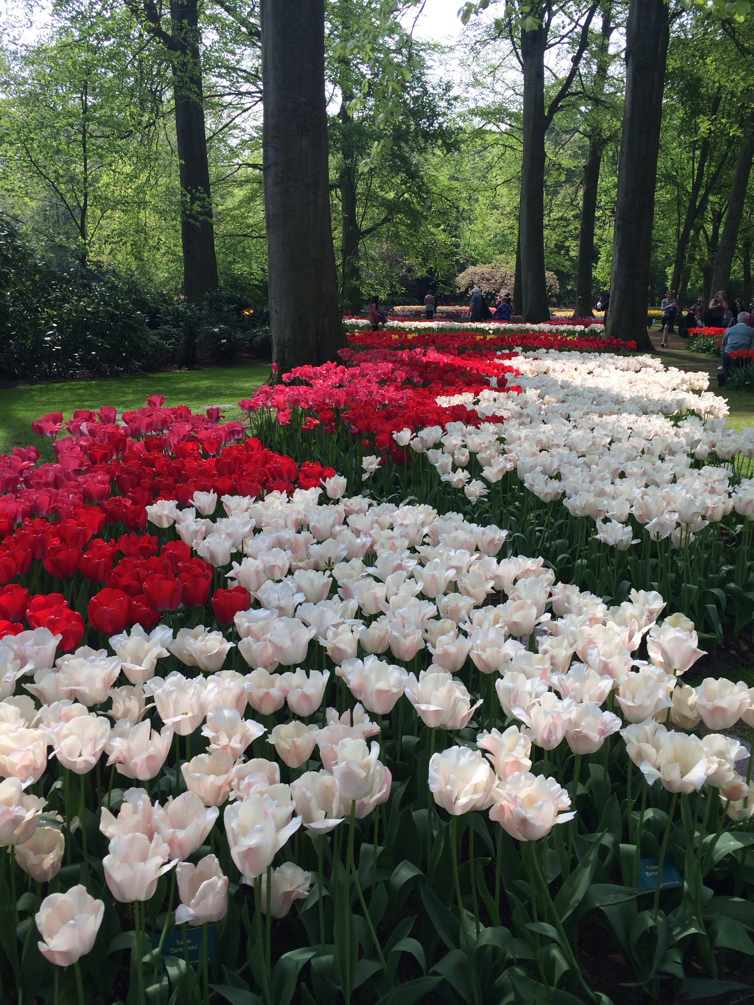 famous flower gardens in the world – loris decoration